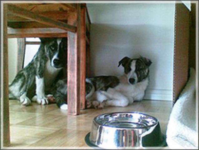 """Koirien ensimmäinen päivänä niiden ainoa kysymys oli: """"Kuka ottaa vastuun?"""""""